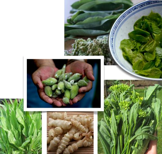 explore new veggies